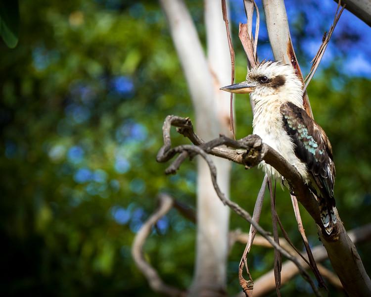 011119 birds  .JPG