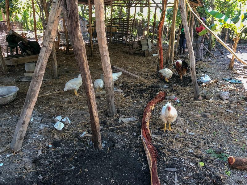 iPhone_Haiti--24.jpg