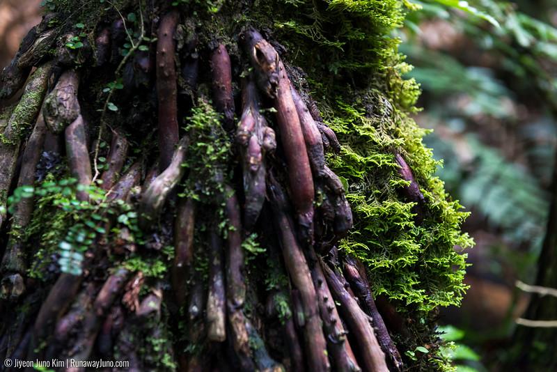 Waiau Falls Scenic Reserve walk