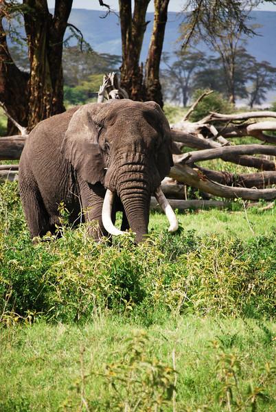 Ngorongoro (284).JPG