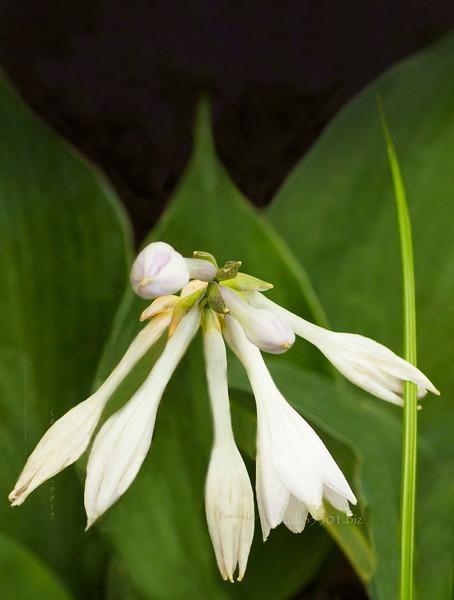 Bob's white flower 3829.jpg