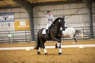 Horse 173