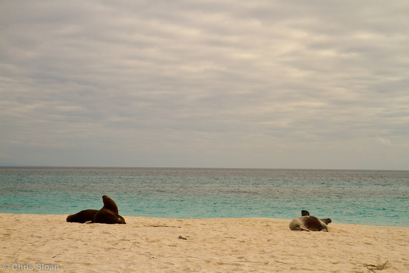 Galapagos Sea Lions at Gardner Bay, Espanola, Galapagos, Ecuador (11-21-2011) - 594.jpg