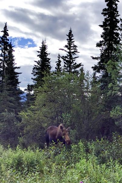 2016 Alaska - Susan Nexus 6P - 260 - 20160725.jpg