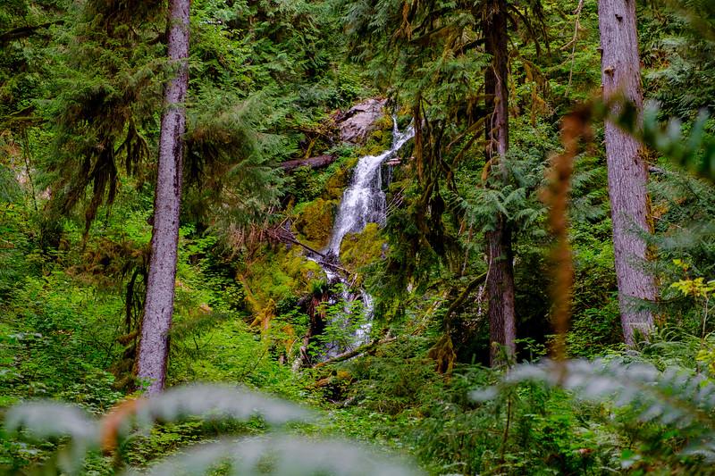 Hoh River Trail - DSCF4515.jpg