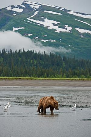 Alaska, Lake Clark National Park, Silver Salmon Creek