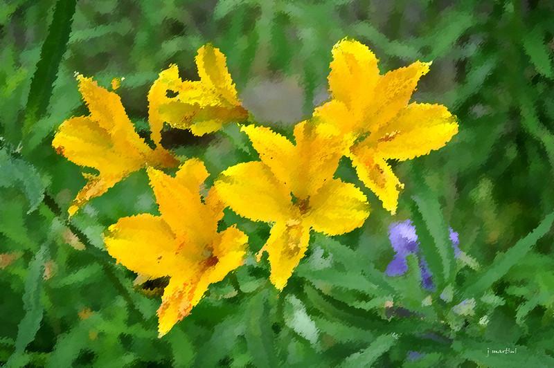 dream gardens 11 2-5-2011.jpg