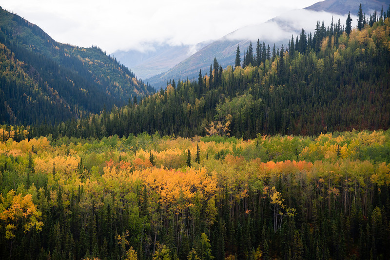 _RQ46686 Denali National Park, Alaska