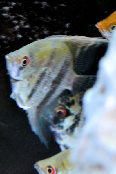 fish (8).jpg