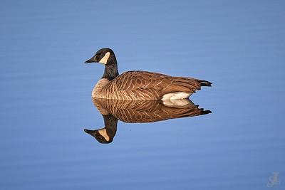 Canadian Bird Photos