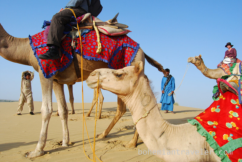 on a Rajasthan Camel Safari (2).jpg