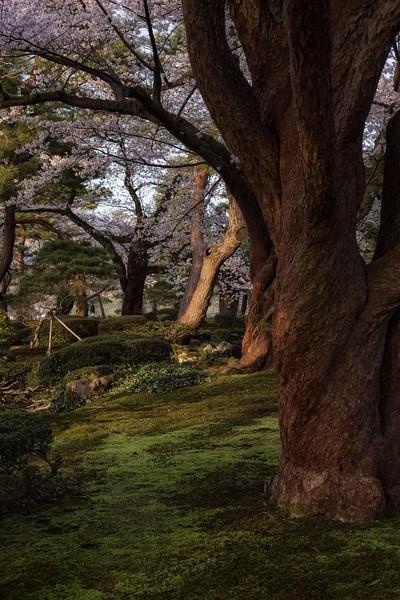 Kanazawa 080413 15.jpg