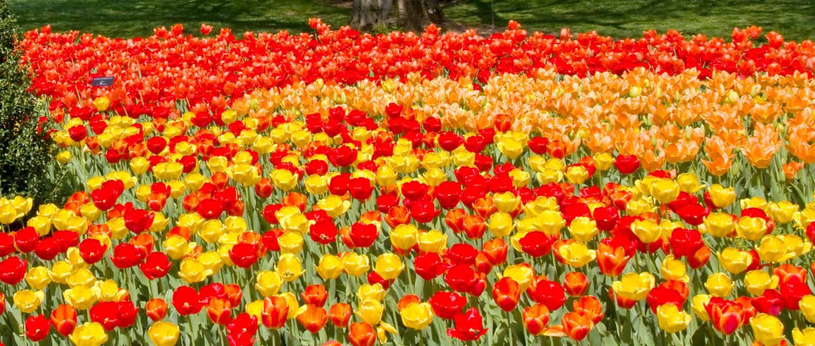 满目鲜花,五彩缤纷