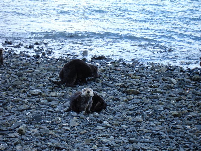 Alaska 2008 098.jpg