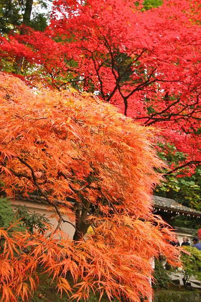Portland Japanese Garden  11-11-11  3586.jpg