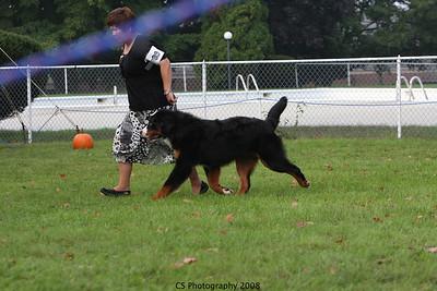 Puppy 9-12mo Dog