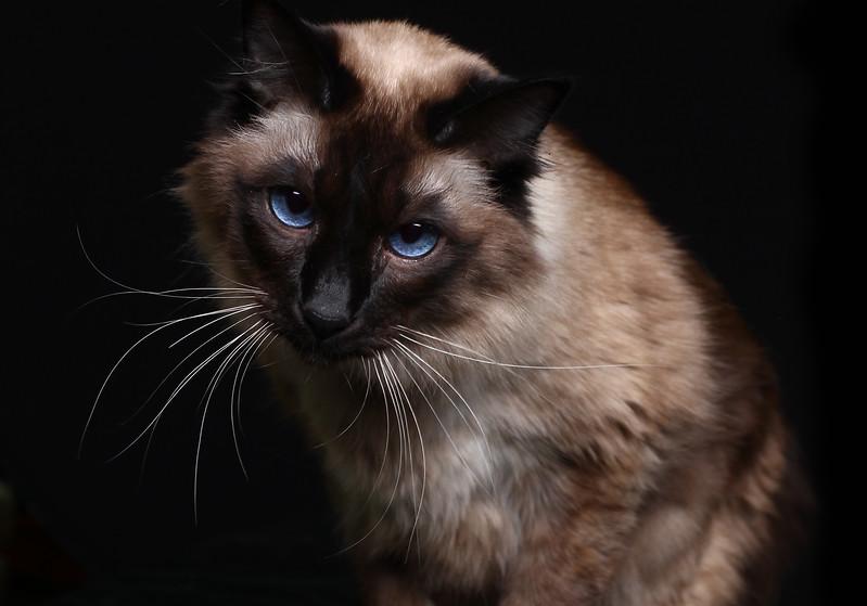 Saule-cat-3.jpg