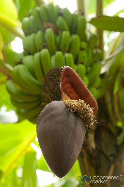 Banana Blossom - Mto wa Mbu, Tanzania