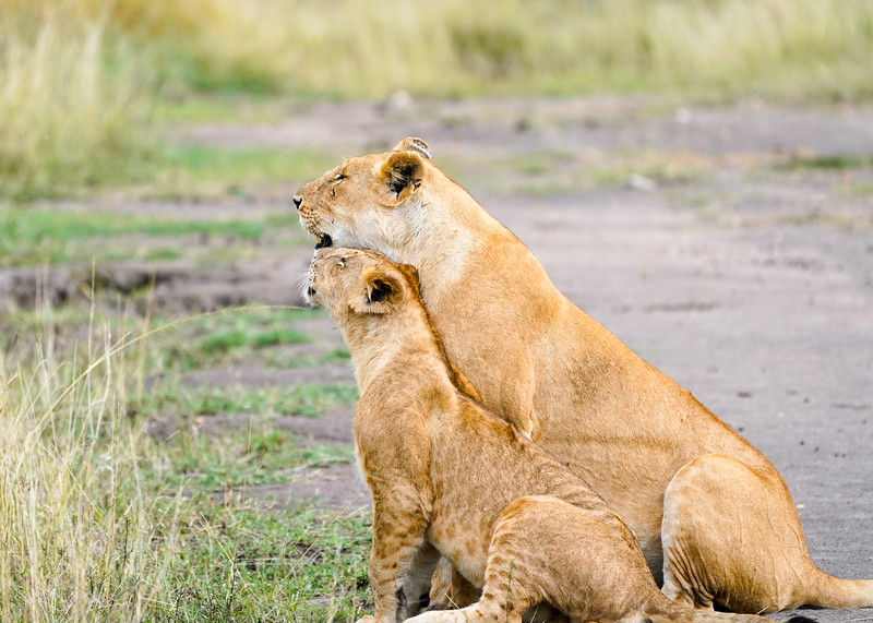 safari-2018-121.jpg