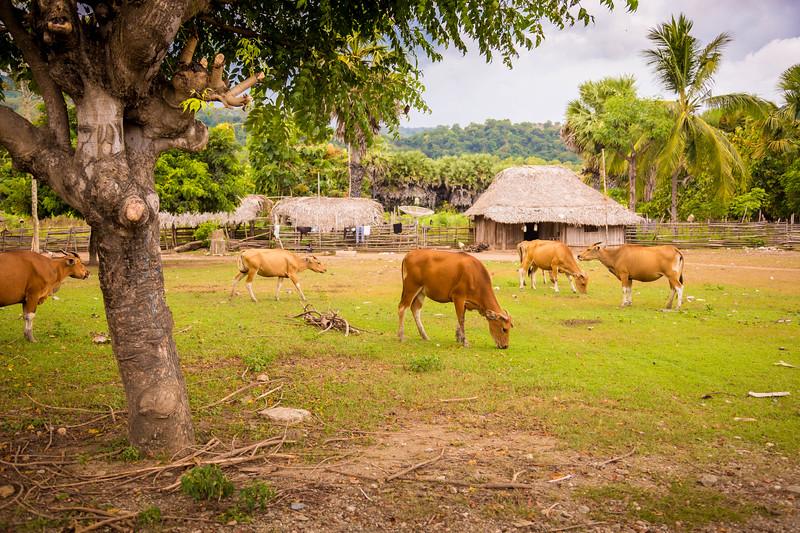 Timor Leste-134.jpg