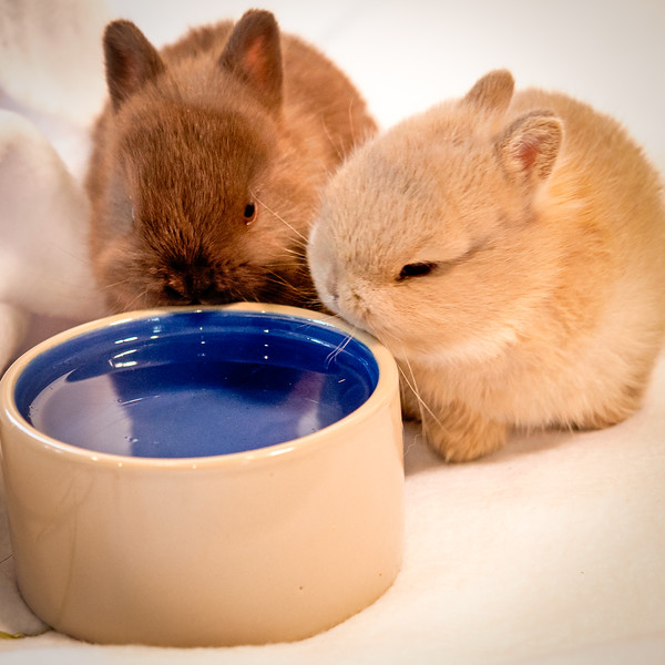 Two Baby Bunnies  (photo #11870)
