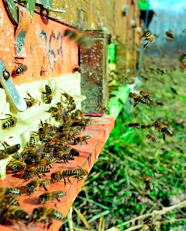 La alimentación, con y sin abejas