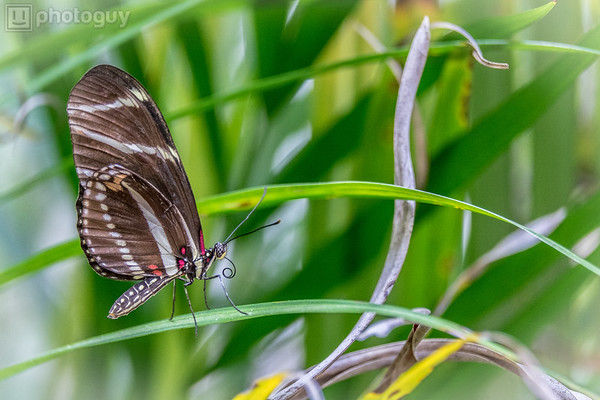20140628_BUTTERFLY_WORLD (14 of 28)