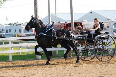 552 - Percheron Ladies Cart