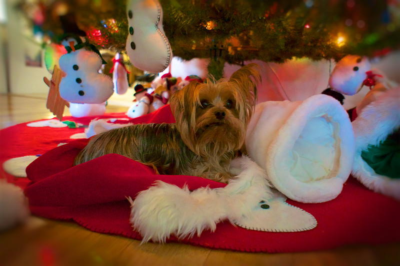 CHRISTMAS 2015_ 2.jpg