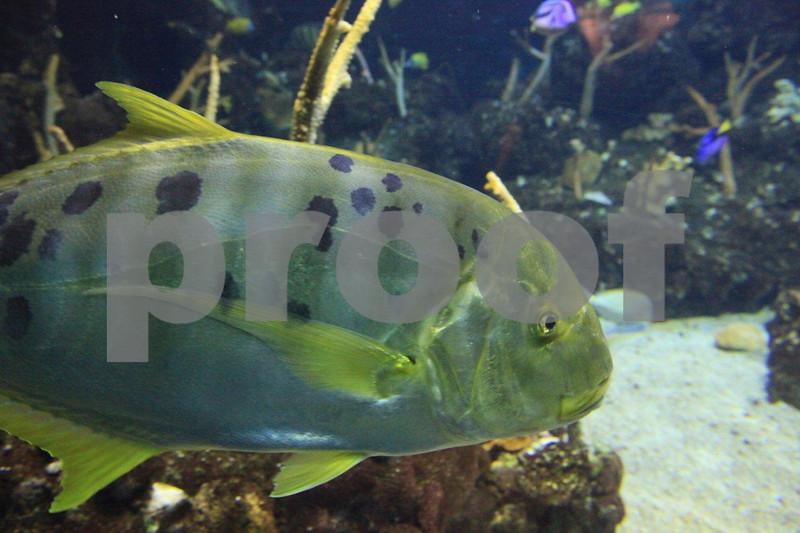 Seattle Aquarium 9136.jpg