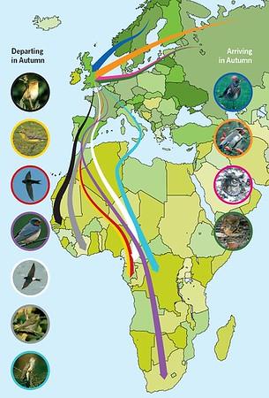 Mapki migracji