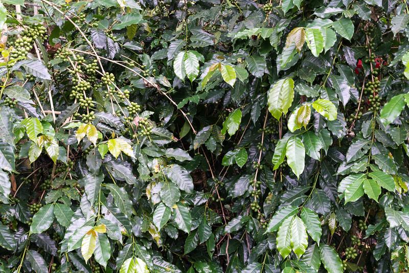 Jade Mtn031.jpg