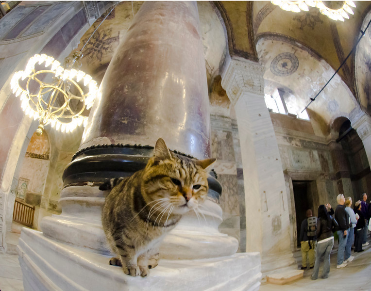 cat horizontal-H-SophiaDSC_2063.jpg