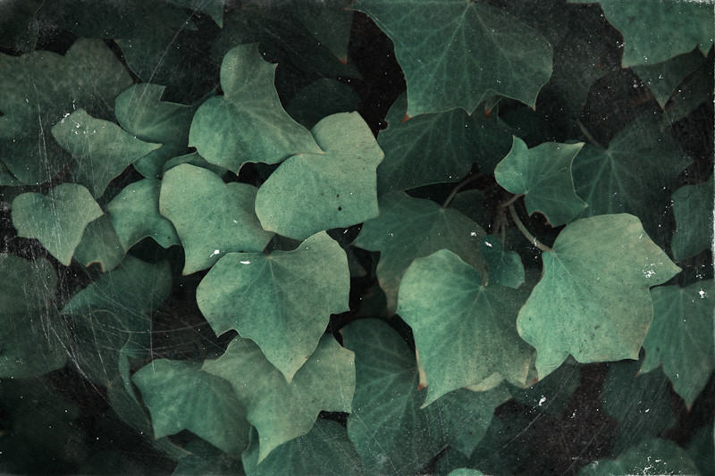 oct 2 - leaves.jpg