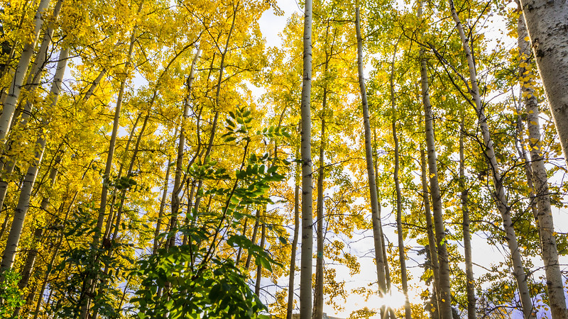 A view of autumn leaves as seen from the Troth Yedha' campus. UAF photo by JR Ancheta.