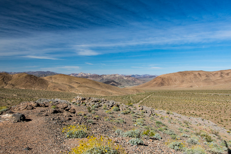 Southend-Death-Valley-April-spring-2017flowersjpg.jpg