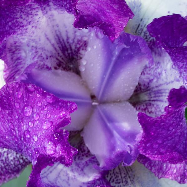 Flowers 5-5 21.jpg