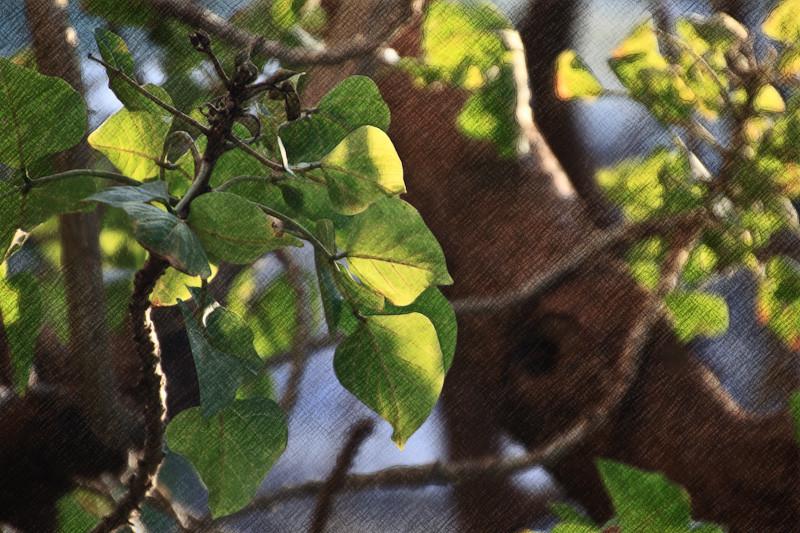jan 31 - leaves.jpg