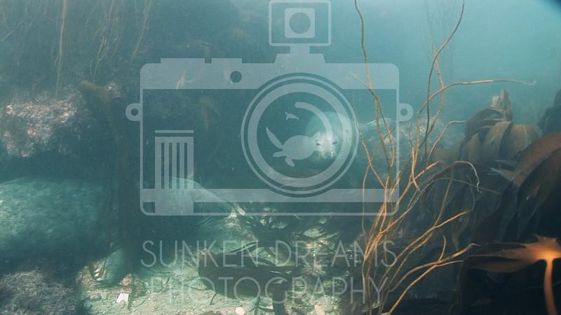 Lundy Island Edit.Still056.jpg