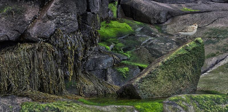 grees-algues.jpg