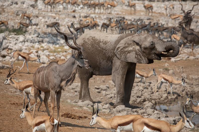 Namibia 69A7960.jpg