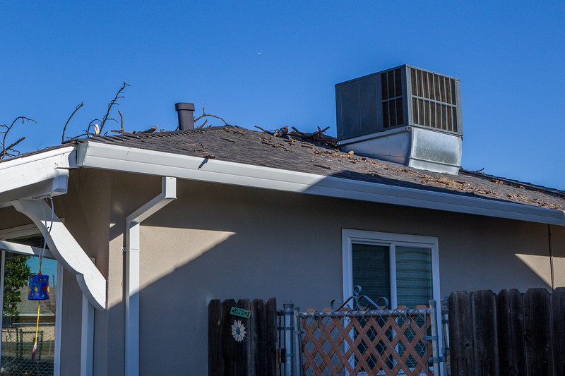 5671 Wallace Ave - Tree 1030am 12 16 2017 Extremly Windy Conditions-4.jpg