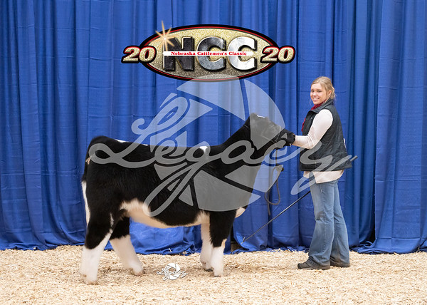 Fancy Heifers and Classic Steers and Heifers