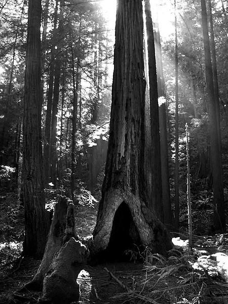 Muir Woods CA.jpg