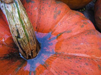 fall colors I love