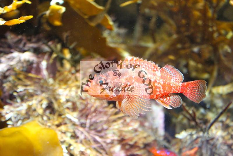 Aquarium 20151.jpg