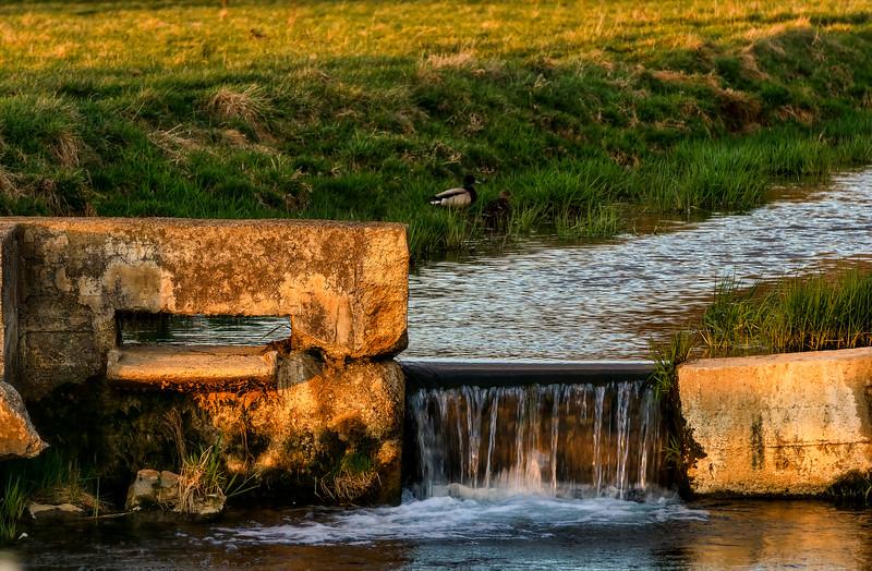 Creek - Ducks Spring Sunset(p).jpg