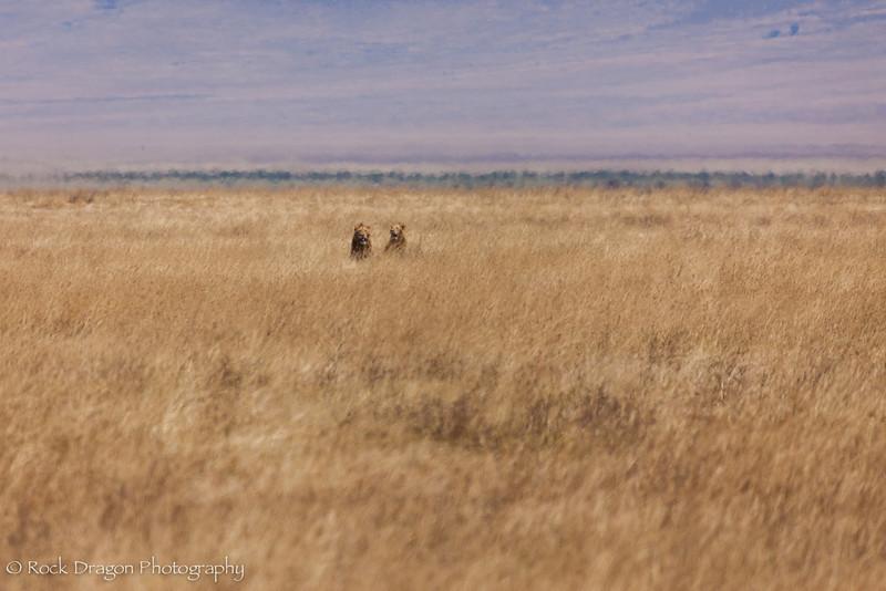 Ngorongoro-59.jpg