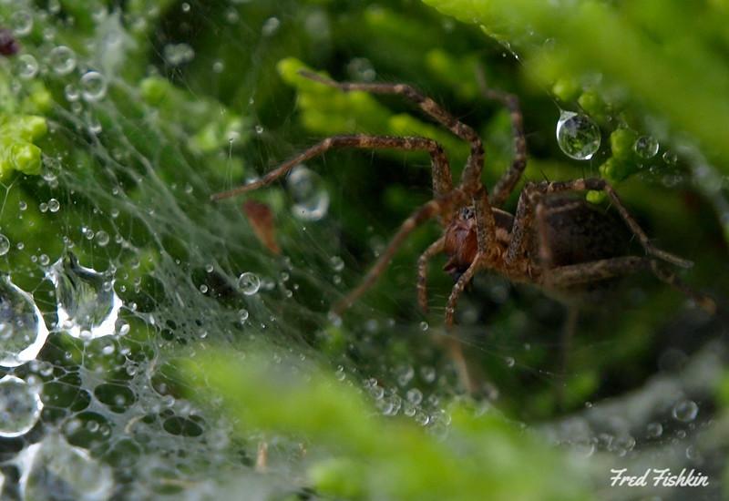 spider rain.jpg