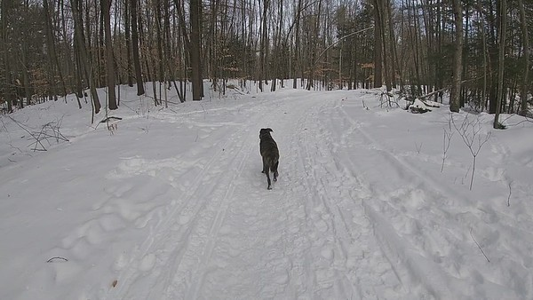 Tucker & French Forest 2-12-2021